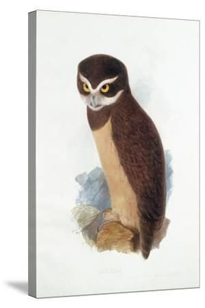 Spectacled Owl, August 1836-Edward Lear-Stretched Canvas Print