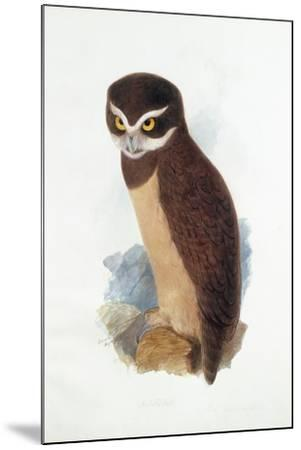 Spectacled Owl, August 1836-Edward Lear-Mounted Giclee Print