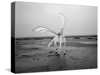 Pegasus 2-Jaschi Klein-Stretched Canvas Print