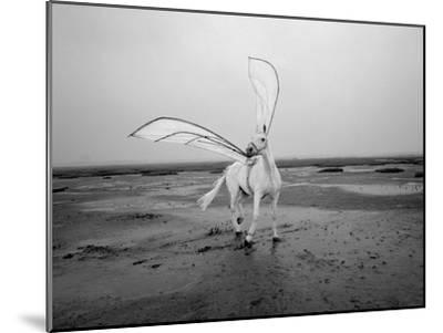 Pegasus 2-Jaschi Klein-Mounted Premium Photographic Print