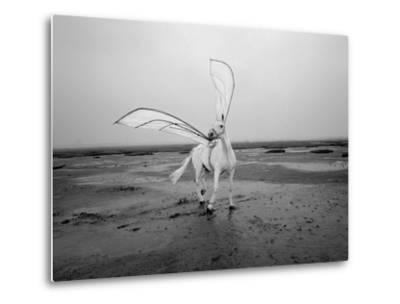 Pegasus 2-Jaschi Klein-Metal Print