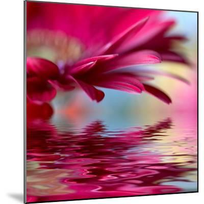 Closeup Of Pink Daisy-Gerbera With Soft Focus Reflected In The Water-silver-john-Mounted Premium Giclee Print