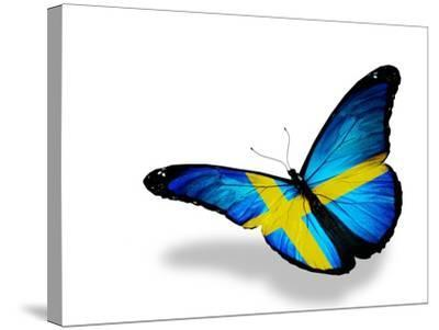 Swedish Flag Butterfly Flying, Isolated On White Background-suns_luck-Stretched Canvas Print