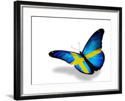 Swedish Flag Butterfly Flying, Isolated On White Background-suns_luck-Framed Art Print