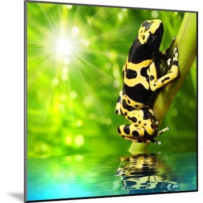 The Frog (Dendrobates Leucomelas) In A Rainforest-Kletr-Mounted Art Print