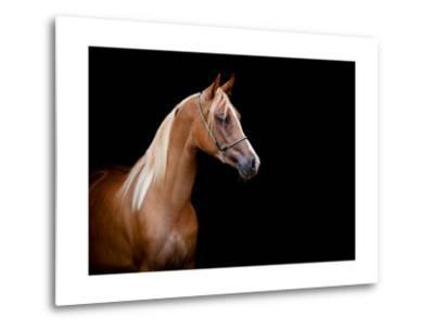 Horse Head Isolated On Black Background-Alexia Khruscheva-Metal Print