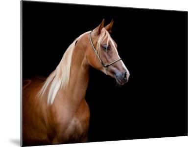 Horse Head Isolated On Black Background-Alexia Khruscheva-Mounted Art Print