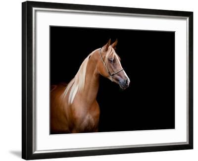 Horse Head Isolated On Black Background-Alexia Khruscheva-Framed Art Print