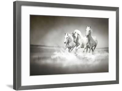 Herd Of White Horses Running Through Water-varijanta-Framed Art Print