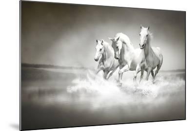 Herd Of White Horses Running Through Water-varijanta-Mounted Art Print