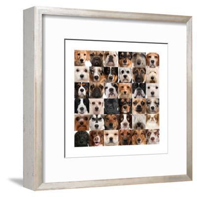 Collage Of 36 Dog Heads-Life on White-Framed Art Print