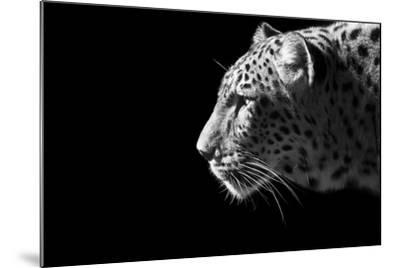 Leopard Portrait-Reddogs-Mounted Art Print