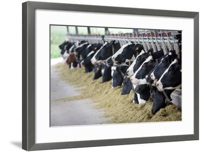 Holstein Cows-Alexandru Nika-Framed Art Print