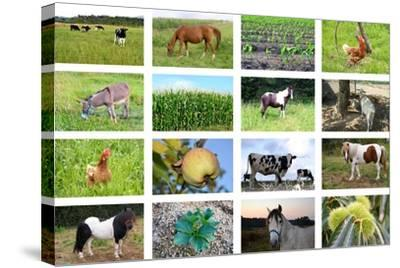 Farm Collage- miff32-Stretched Canvas Print