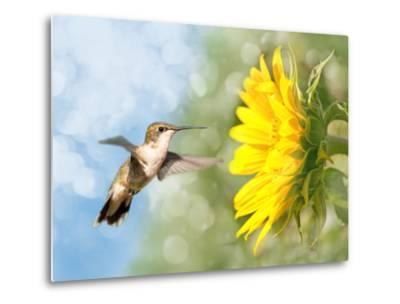 Dreamy Image Of A Hummingbird Next To A Sunflower-Sari ONeal-Metal Print