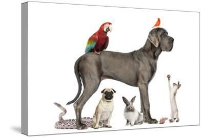 Group Of Pets - Dog, Cat, Bird, Reptile, Rabbit, Isolated On White-Life on White-Stretched Canvas Print