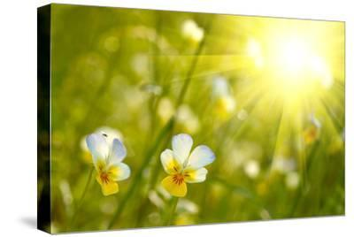 Spring Flowers Background-silver-john-Stretched Canvas Print