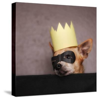 A Cute Chihuahua With A Crown And Mask On-graphicphoto-Stretched Canvas Print