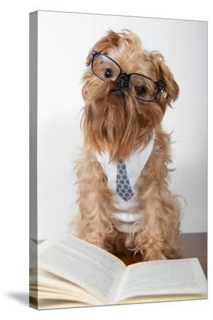 Serious Dog In Glasses-Okssi-Stretched Canvas Print