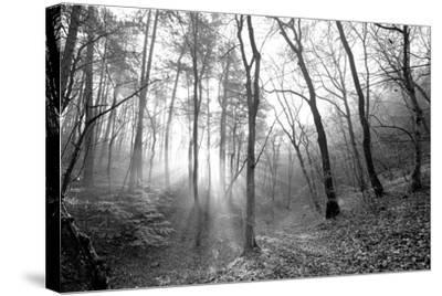Autumn Forest With Fog And Lights-udvarhazi-Stretched Canvas Print