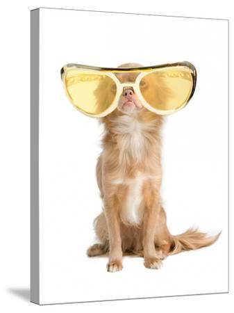 Tiny Chihuahua Dog With Funny Huge Glasses-vitalytitov-Stretched Canvas Print