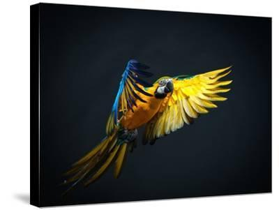 Colourful Flying Ara On A Dark Background-NejroN Photo-Stretched Canvas Print