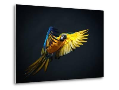 Colourful Flying Ara On A Dark Background-NejroN Photo-Metal Print