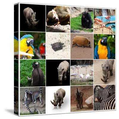 Various Wild Animals Composition-Aaron Amat-Stretched Canvas Print