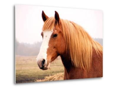 Palomino Horse Portrait-Anastasija Popova-Metal Print