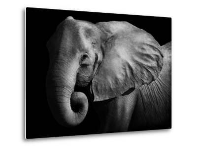 Elephant-Donvanstaden-Metal Print