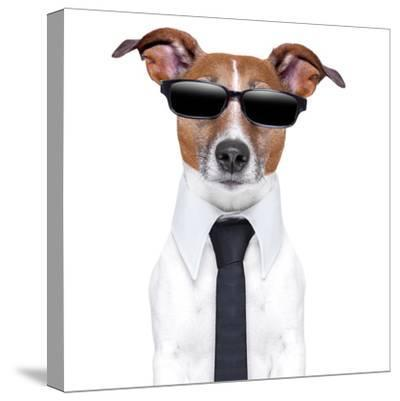 Cool Doggy-Javier Brosch-Stretched Canvas Print