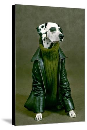 Dalmatian-ingret-Stretched Canvas Print