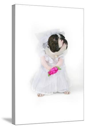 Dog Bride-graphicphoto-Stretched Canvas Print