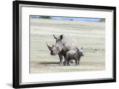 White Rhinoceros Mother with Calf, Kenya-Martin Zwick-Framed Photographic Print