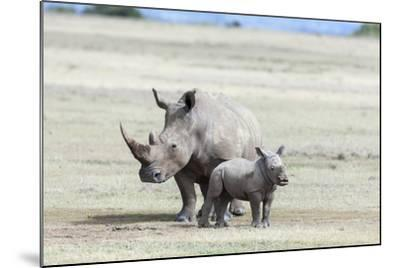 White Rhinoceros Mother with Calf, Kenya-Martin Zwick-Mounted Photographic Print