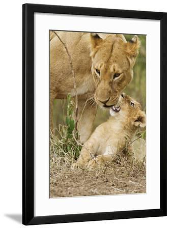 Lion with Young One, Maasai Mara Wildlife Reserve, Kenya-Jagdeep Rajput-Framed Photographic Print