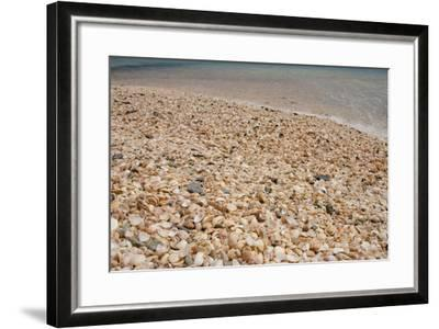 Capital City of Gustavia, Shell Beach, St. Bart's, West Indies-Cindy Miller Hopkins-Framed Photographic Print