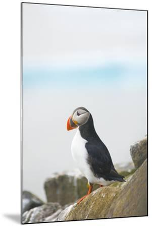 Atlantic Puffin Perched on a Cliff, Spitsbergen, Svalbard, Norway-Steve Kazlowski-Mounted Photographic Print