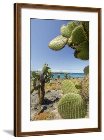 Giant Prickly Pear Cactus, South Plaza Island, Galapagos, Ecuador-Cindy Miller Hopkins-Framed Photographic Print