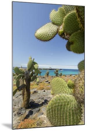 Giant Prickly Pear Cactus, South Plaza Island, Galapagos, Ecuador-Cindy Miller Hopkins-Mounted Photographic Print