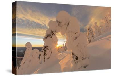Snow Ghosts in the Whitefish Range, Montana, USA-Chuck Haney-Stretched Canvas Print