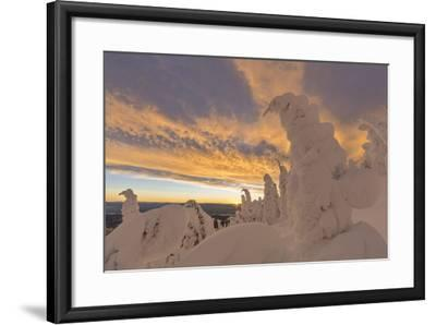 Snow Ghosts in the Whitefish Range, Montana, USA-Chuck Haney-Framed Photographic Print