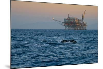 Dolphin Pod Leap Near Oil Derrick, Catalina Channel, California, USA-Peter Bennett-Mounted Photographic Print