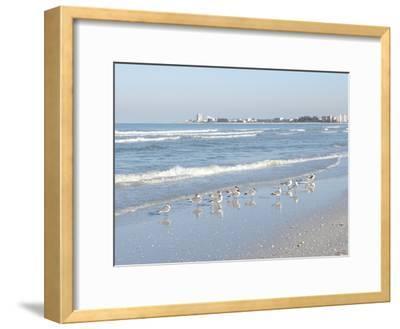 Laughing Gulls Along Crescent Beach, Sarasota, Florida, USA-Bernard Friel-Framed Photographic Print