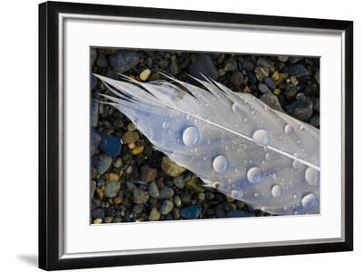 Feather on Beach, Lands End, Homer, Alaska, USA-Tom Norring-Framed Photographic Print