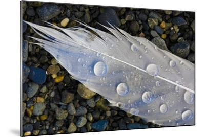 Feather on Beach, Lands End, Homer, Alaska, USA-Tom Norring-Mounted Photographic Print