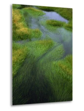Spring Grasses in Calm Stream, Yellowstone National Park, Wyoming, USA-Jerry Ginsberg-Metal Print