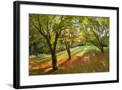 Fall Scenic on the Bloedel Reserve, Bainbridge Island, Washington, USA-Jaynes Gallery-Framed Photographic Print