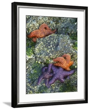 Orcas Island, Washington, USA-Charles Gurche-Framed Photographic Print
