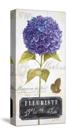Parisian Hydrangea-Angela Staehling-Stretched Canvas Print